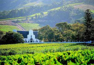 Tour dos Vinhedos da Cidade de Stellenbosch